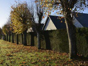 mairie-bellengerville-maisons